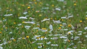 移动风的野花