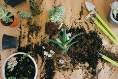 移植的植物到一个新的罐里 免版税库存照片