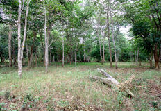 稀疏的森林 免版税库存照片
