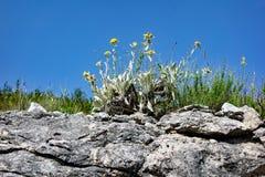 稀稀落落的杂草和被风化的岩石,克罗地亚 图库摄影
