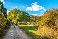 稀稀落落的起点森林道路,秋天, 11月,斯洛伐克 免版税库存照片