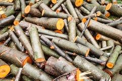 稀薄和厚实的木日志堆。未加工的木材。 免版税库存图片
