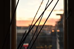 稀薄的枝杈和日落 库存图片