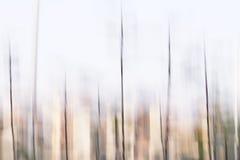 稀薄的长的草 库存图片
