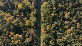 稀薄的高速公路的空中射击在喀尔巴阡山脉森林里在夏天 股票视频