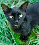 稍带黑的猫 免版税库存照片
