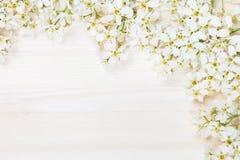 稠李分支在一个轻的木板的 边界 复制空间 背景细部图花卉向量 木背景 免版税库存图片