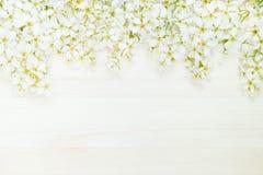 稠李分支在一个轻的木板的 边界 复制空间 背景细部图花卉向量 木背景 库存图片