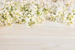 稠李分支在一个轻的木板的 边界 复制空间 背景细部图花卉向量 木背景 免版税库存照片