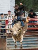 稳当看公牛的车手 免版税图库摄影