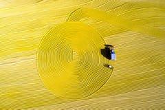 稻收获空中照片在农村中国 免版税图库摄影