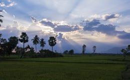 稻田和阳光 库存图片