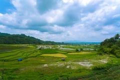 稻田在武吉丁宜西部苏门答腊印度尼西亚 库存照片