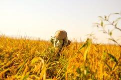 稻田的印度尼西亚农夫 库存照片