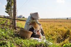 稻田的资深女性农夫 免版税库存照片