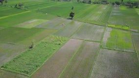 稻田空中风景英尺长度  影视素材