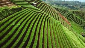 稻田美丽的景色与小屋的 股票录像