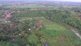 稻田美好的天线/寄生虫视图在slawi城市印度尼西亚 影视素材