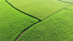 稻田鸟瞰图从东山乡,宜兰,台湾的 股票录像