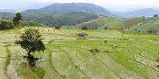 稻田 免版税图库摄影