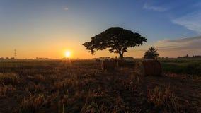 稻秸杆劳斯有在Sungai Besar,雪兰莪,马来西亚的金黄日落背景 免版税库存照片
