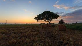 稻秸杆劳斯有在Sungai Besar,雪兰莪,马来西亚的金黄日落背景 库存图片