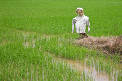 稻草人做ââ¬â ¹ ââ¬â ¹秸杆,被撕毁的衣裳。 图库摄影