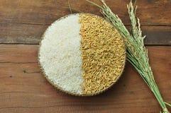 稻&米 免版税库存图片
