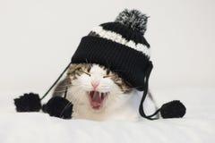 滑稽猫打呵欠准备好睡觉,戴有绒球的一个温暖的帽子 库存图片