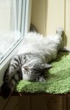 滑稽的休息的猫在阳台上在晴朗的热的夏日,困猫,在大阳台的幼小小猫,与开放眼睛的半困猫 库存照片