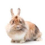 滑稽的兔子 免版税库存照片