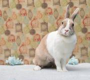 滑稽的兔宝宝坐在五颜六色的墙壁后的一个地毯 图库摄影