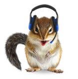 滑稽的动物电话中心操作员,与电话耳机的花栗鼠 免版税图库摄影