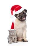 滑稽的哈巴狗小狗开会和微小的苏格兰猫在红色圣诞节h 免版税图库摄影