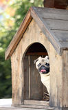 滑稽的哈巴狗狗在犬小屋里 免版税库存照片