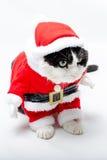 滑稽的圣诞节小猫 免版税库存图片