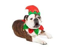 滑稽的圣诞节矮子狗 免版税库存图片