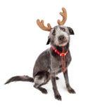 滑稽的圣诞节驯鹿狗 库存图片