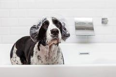 滑稽的在木盆的狗佩带的浴帽 免版税库存图片