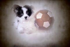 滑稽的小狗和老足球bal 免版税库存图片