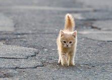 滑稽的小猫 免版税库存图片