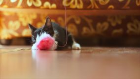 滑稽的小猫 股票视频