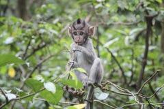 滑稽的小猿崽在密林 免版税库存照片