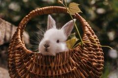 滑稽的小的兔子兔宝宝 免版税库存图片