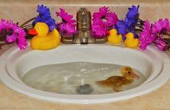 滑稽的小的游泳 免版税库存图片