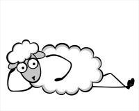 滑稽的幼小绵羊 库存照片