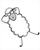 滑稽的幼小绵羊 库存图片