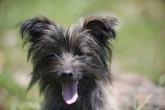 滑稽的微笑的狗 库存图片