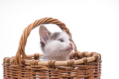 滑稽的查出的小猫空白的一点 库存照片