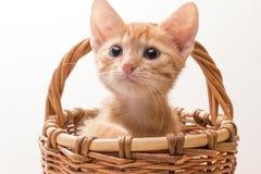 滑稽的查出的小猫空白的一点 免版税图库摄影